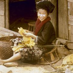 A Yao (Iu Mien) girl prepares tobacco for drying in the town of Nam Kheung in Houa Khong Province