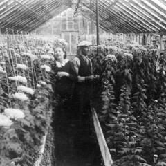 Riverside Florist Greenhouse. Rochester, Wisconsin