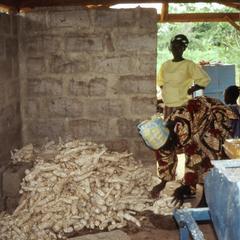Women with cassava