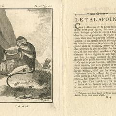 Talapoin