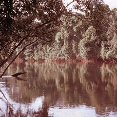 Cavally River on the Border between Liberia and the Ivory Coast