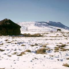 House and Horse in the Mountains in Winter