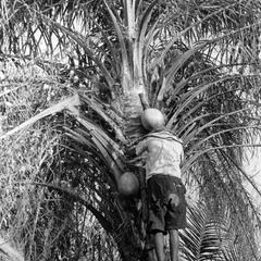 Palm Wine Tapper Exchanging Containers