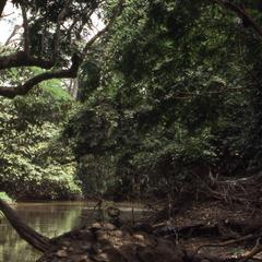 Fallen trees and Osun River