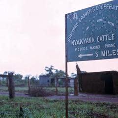 Nyakama Cooperative Cattle Ranch