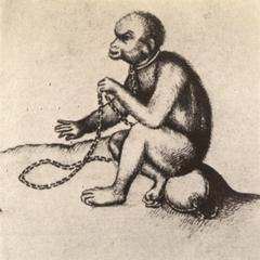 Chained Ape