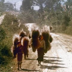 Local women carry a type of grass for making brooms in Houa Khong Province