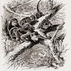 Macaques de Buffon Effrayés un Serpent