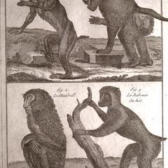 Histoire Naturelle, Quadrupedes