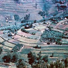 A View of the Fields of Gitarama