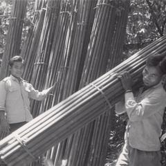 Bamboo poles are bundled and stacked ready to be carried away for processing in Attapu Province
