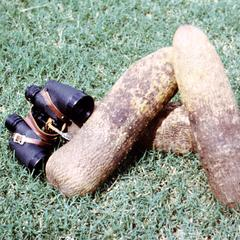 Yams with Binoculars Showing Size