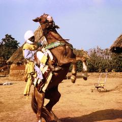Horseman During National Festivities in Kaladi Gbaya