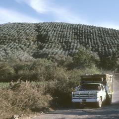 Lumber truck from Sierra de Manantlán