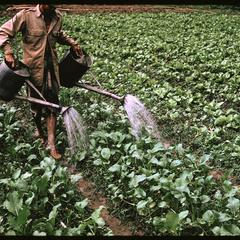 Tha Deua bend : watering crop