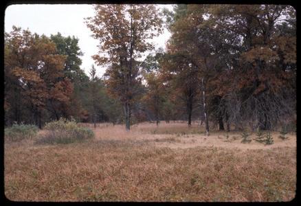 Jack pine area under fire management, Necedah Oak-Pine Forest, State Natural Area