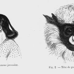 Fig. 1--Femme javanaise; Fig 2--Tète de guenon ascagne