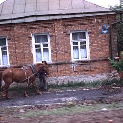 Man walking with a horse