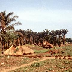 Farming Village with Palm Trees