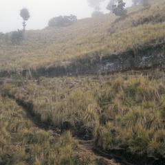 Alpine grassland with bunchgrasses above Totomicampan