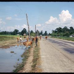 Tha Deua-Vientiane Road