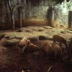 Zoo exhibit at the Ife Zoo