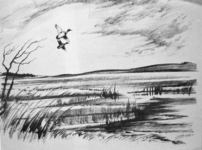 Two ducks in flight over lake-edge marsh