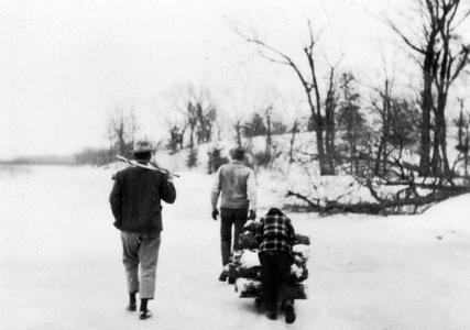 Aldo, Luna, and Estella Leopold pulling firewood on sled