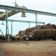 Sugar Cane being Loaded at Refinery