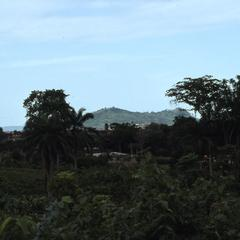 ORA palm trees and vegetation