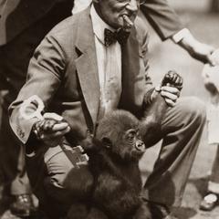 Standing Juvenile Gorilla Print