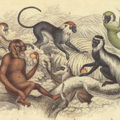 Primate Group Print
