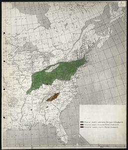 Hicoria ovalis odorata (Sargent) Sudworth - hickory, [etc.]