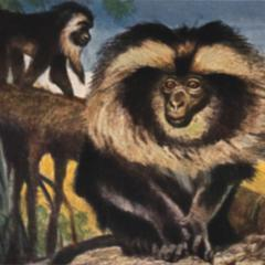 Cottontop Tamarin Group Print