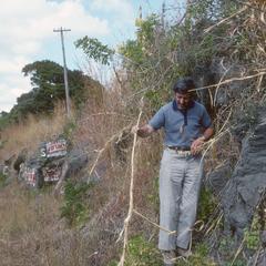 Hugh Iltis with teosinte, east of El Progreso