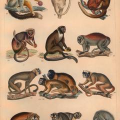 New World Monkeys Group Print