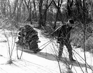 Aldo Leopold pulling sled with firewood