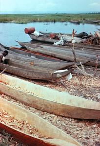 Dugout Canoes Being Made on Congo River Bank