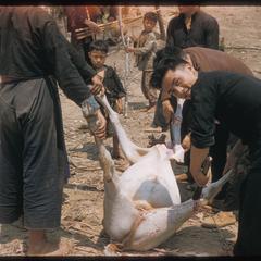 """""""Nyuj Dab"""" (Cow Spirit) ritual, image 12"""