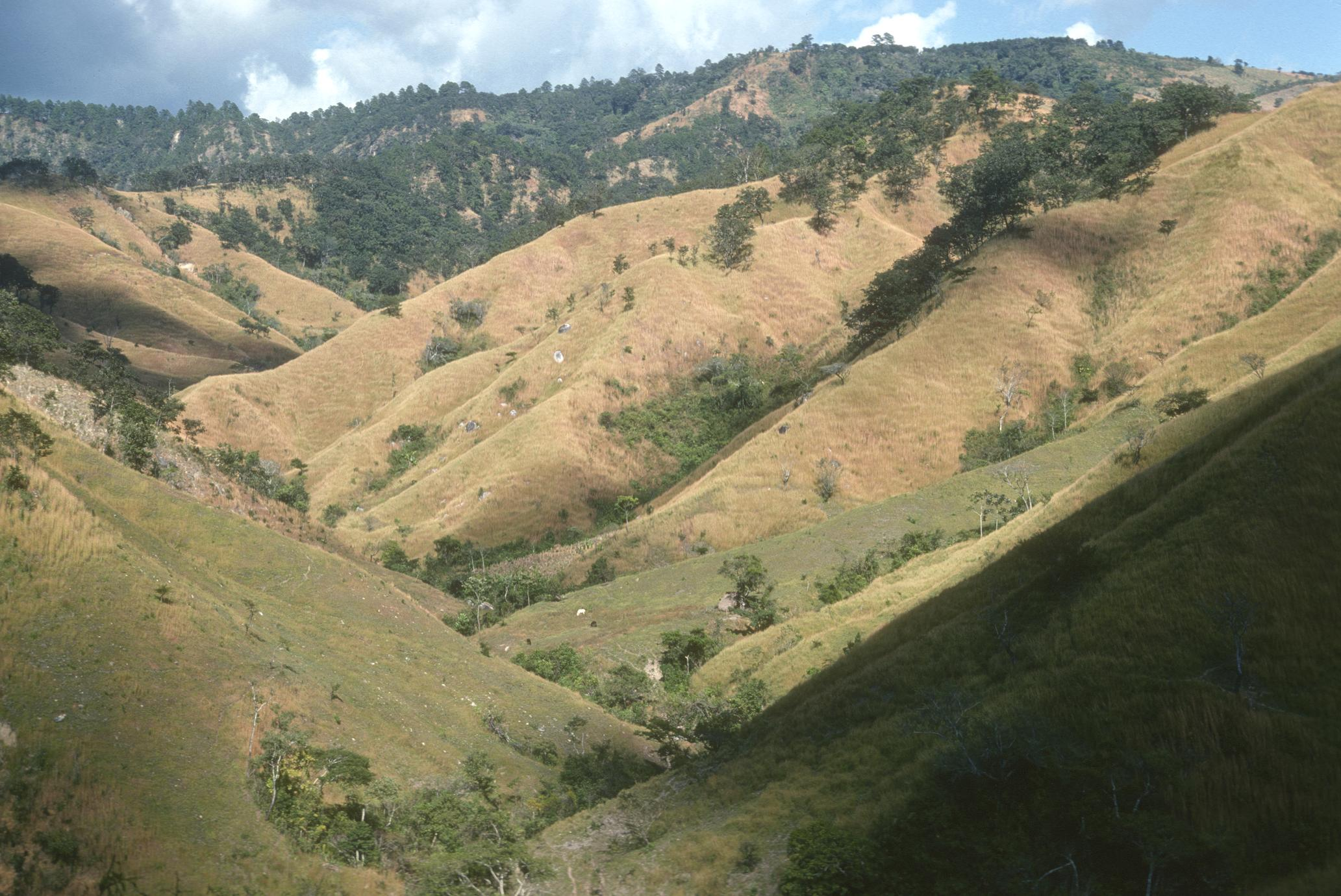 Grazed savanna between Cuilapa and Jutiapa