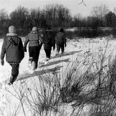 Group trekking from marsh toward road in winter