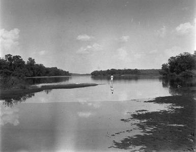 Starker Leopold swimming in river