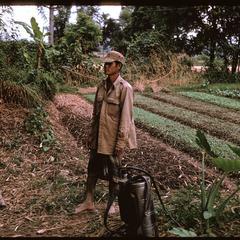 Tha Deua bend : irrigated garden