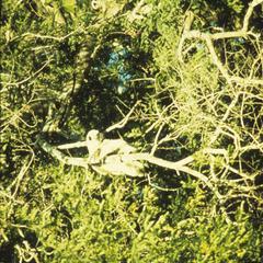 Propithecus verreauxi verreauxi