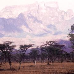 Acacia Scrub in Northern Uganda with Mountains in Background