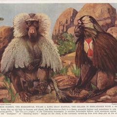 Egypt's Sacred Baboon