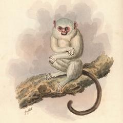 The Fair Monkey