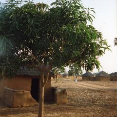 Tree in Paga