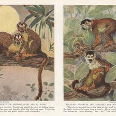 Owl Monkeys and Squirrel Monkeys