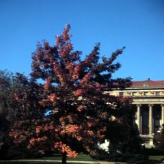 Tree in front of Agricultural Hall